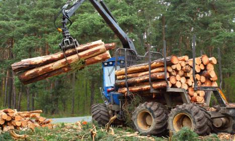 Wagi w przemyśle leśnym