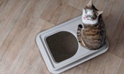 Żwirek dla kota – czym się kierować przy wyborze?