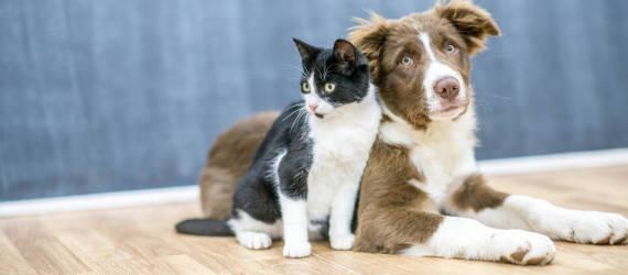 Jakie są zalety korzystania z hotelu dla zwierząt?