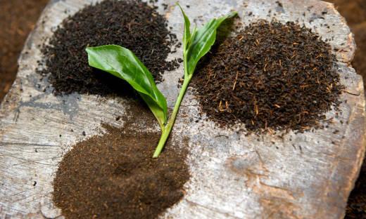 Skąd importowana jest herbata? Miejsca pochodzenia