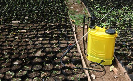 5 zalet ekologicznych środków ochrony roślin