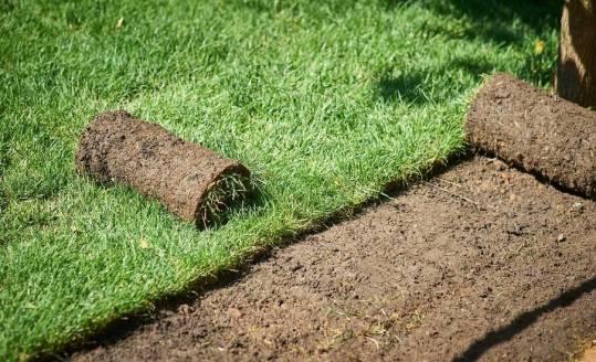 Jak wygląda produkcja trawy w rolkach od zaplecza?