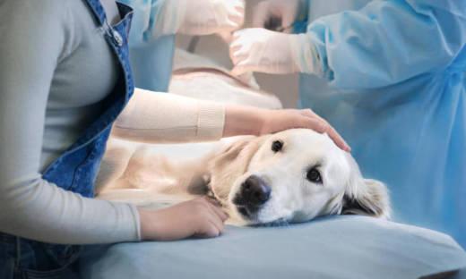 Badania dermatologiczne dla zwierząt – Poznaj ofertę gabinetu weterynaryjnego Elza