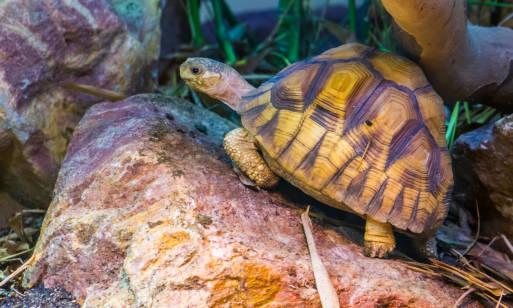 Jak wybrać terrarium dla żółwia?