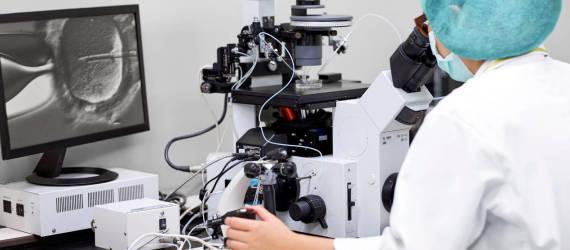 Jak wygląda zapłodnienie in vitro?