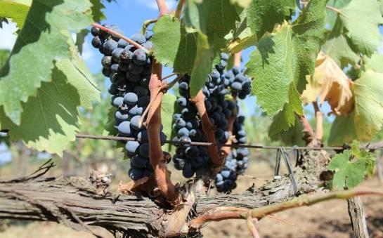 Historia powstania i produkcji wina