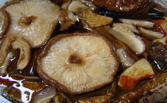 Charakterystyka grzybów shitake
