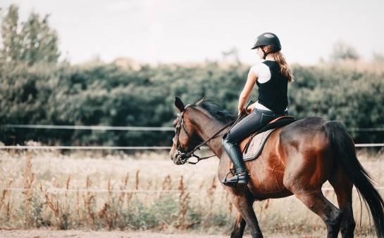 Jak znaleźć dobrą stadninę do nauki jazdy konnej