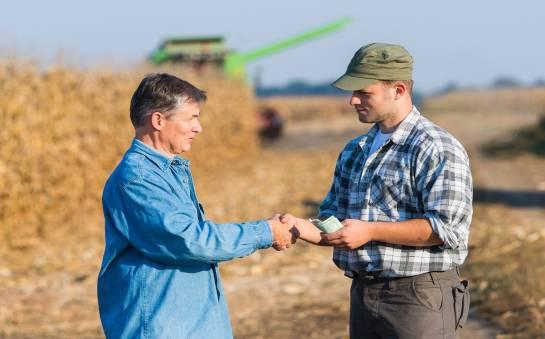 Na czym polega skup zbóż?