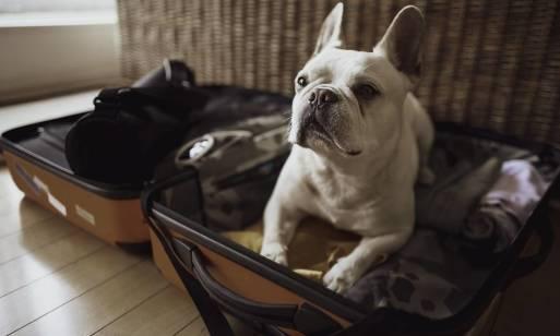 Kiedy warto zarezerwować miejsce w hotelu dla psa?