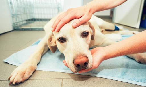 Problem nowotworów u zwierząt