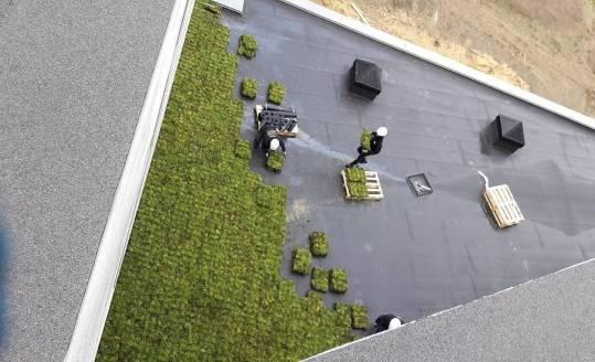 Produkty niezbędne do realizacji nowoczesnych zielonych dachów