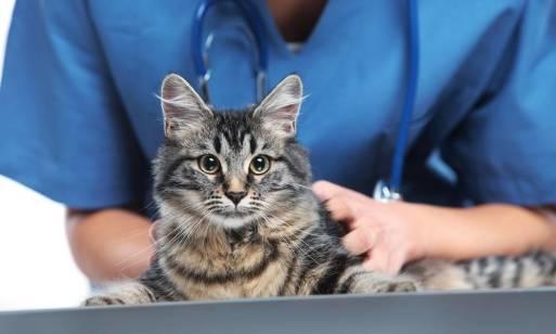 Wykorzystanie elektroterapii w rehabilitacji zwierząt