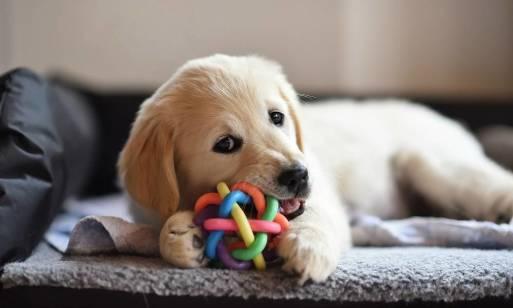 Psie przedszkole. Jak nauczyć psa dobrych nawyków od szczenięcia?